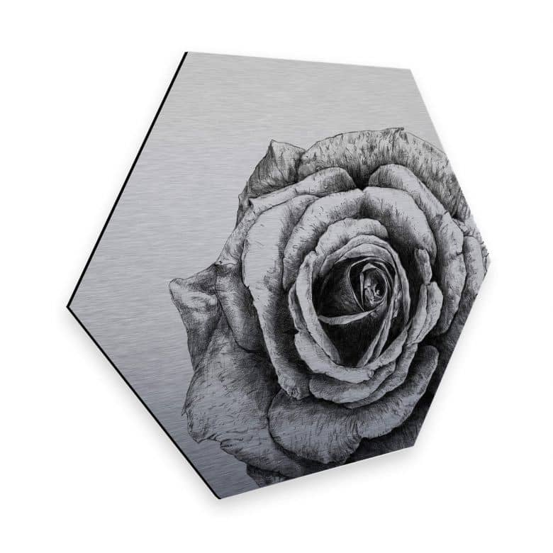 Hexagon - Alu-Dibond Silver effect Kools - Rose