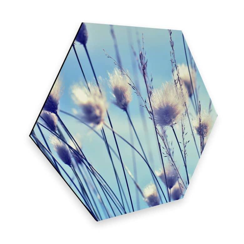 Hexagon - Alu-Dibond Delgado - Windy Grass