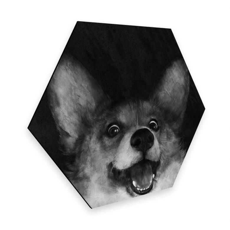 Hexagon - Alu-Dibond Graves - Sausage Fox Corgi