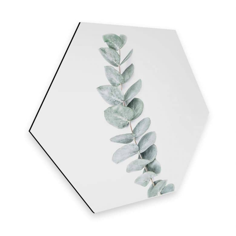 Hexagon - Alu-Dibond - Sisi & Seb - Eukalyptus: Ein Zweig