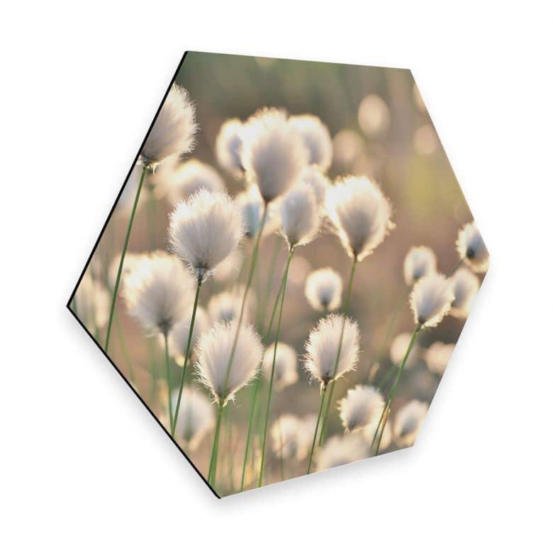 Hexagon - Alu-Dibond Delgado - Flower Magic
