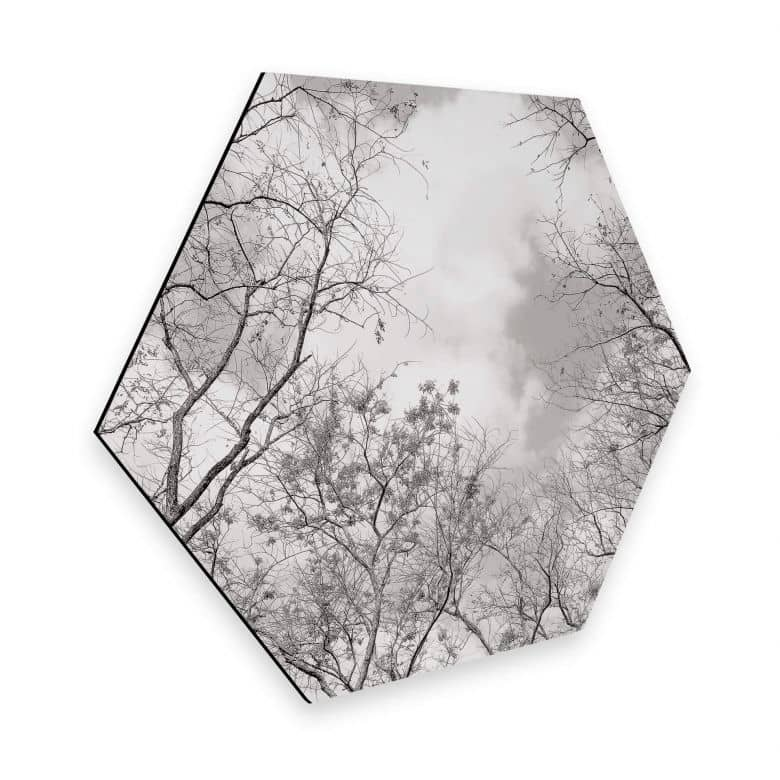 Hexagon - Alu-Dibond Baumkronen im Himmel