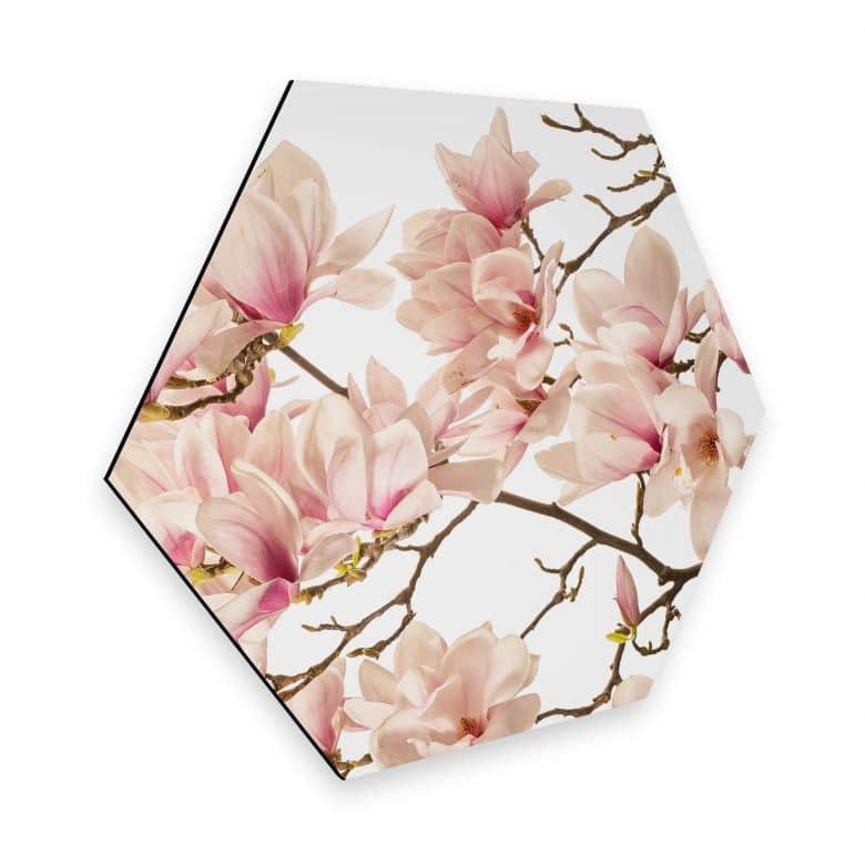 Hexagon - Alu-Dibond Kadam - Flora Magnolia im Frühling