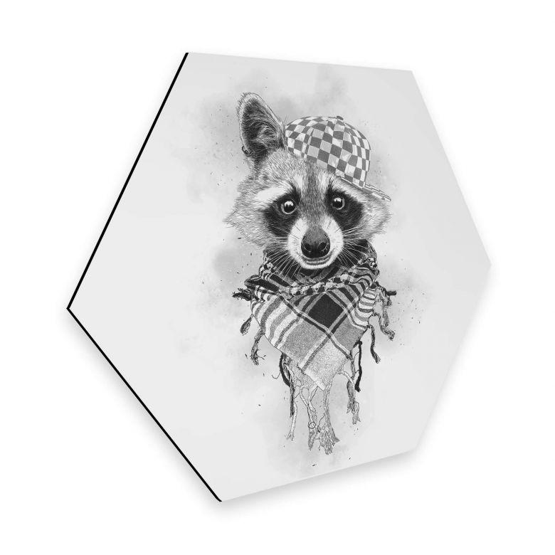 Hexagon - Alu-Dibond Kools - Rocco Raccoon