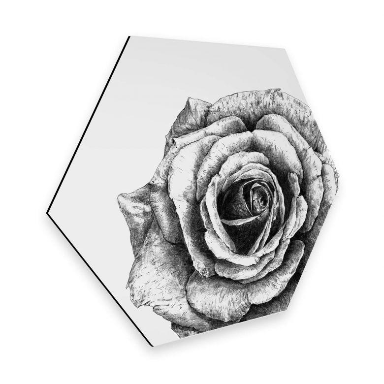 Hexagon - Alu-Dibond Kools - Rose