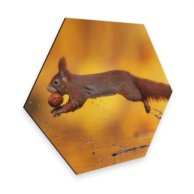 Hexagon - Alu-Dibond van Duijn - Eichhörnchen im Sprung