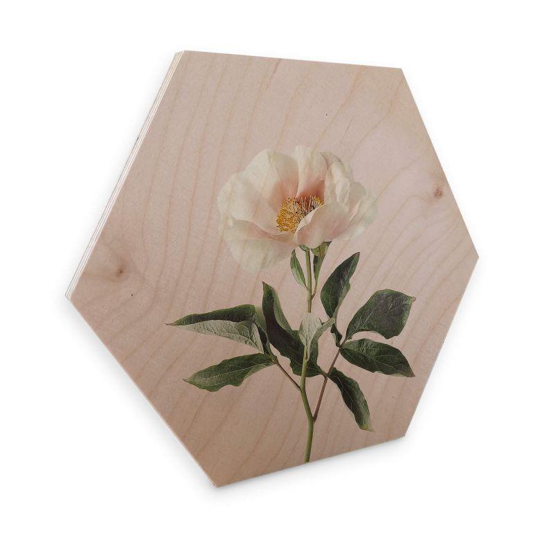 Hexagon - Holz Sisi & Seb - Zart