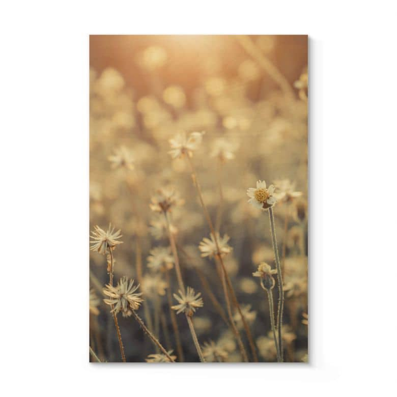 Holzposter Mexican Daisy - Close up