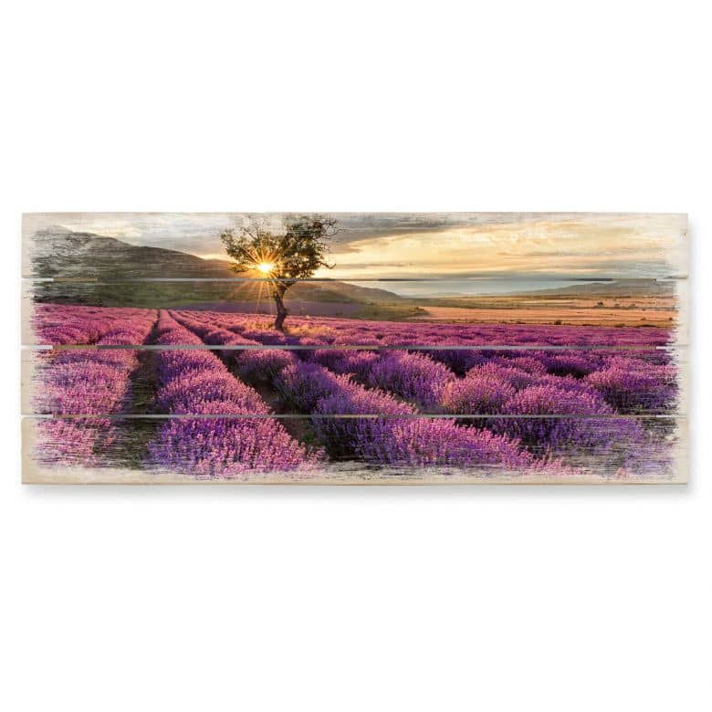 Lavender Flowers in Provence - Panorama Wood print