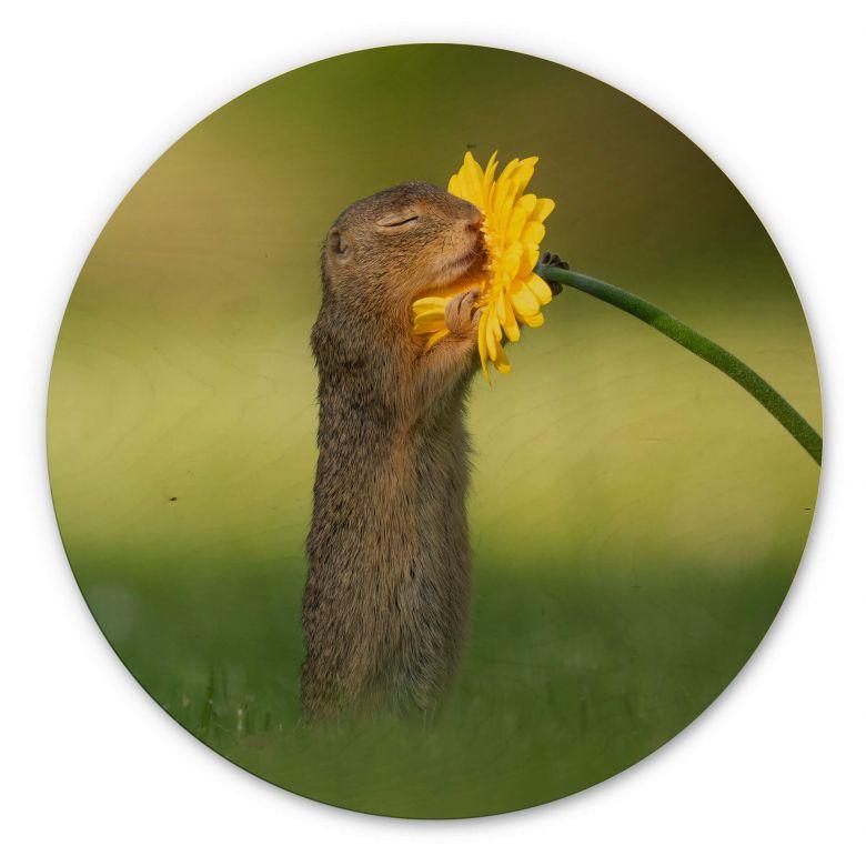 Holzbild van Duijn - Erdhörnchen riecht an Blume - Rund