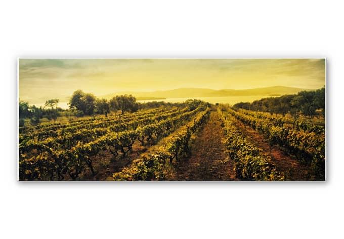 Wandbild Weinreben im Sonnenuntergang - Panorama