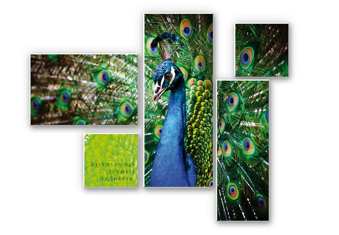 Wandbild In jedem Geschöpf der Natur (5-teilig)