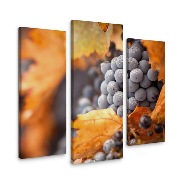 Leinwandbild Wein im Herbst (3-teilig)