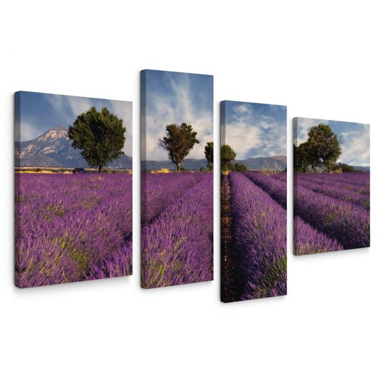 Leinwandbild Lavendelfeld (4-teilig)