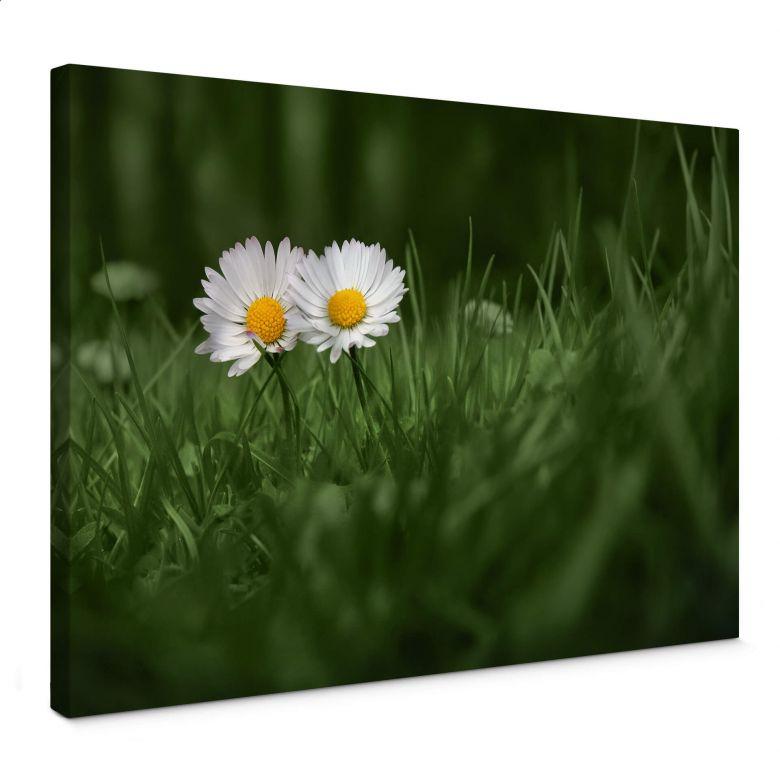 Canvas Ben Heine – Daisies