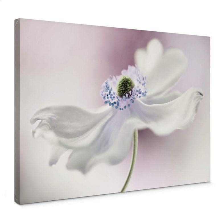 Canvas Disher - Anemone Breeze