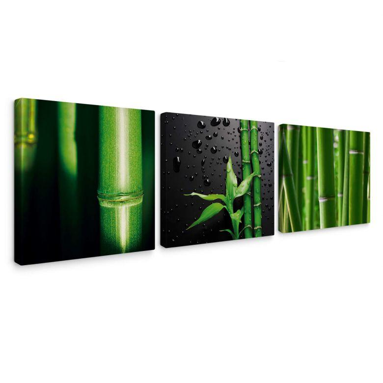 Leinwandbild Bambus-Set - quadratisch (3-teilig)