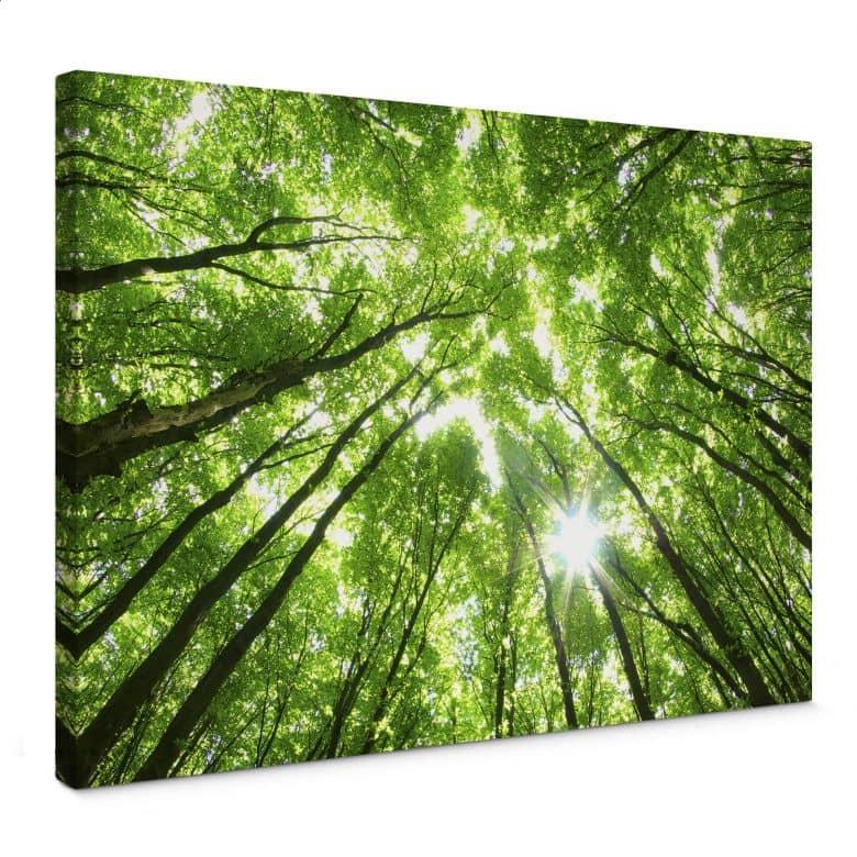Leinwandbild Baumkronen im Wald
