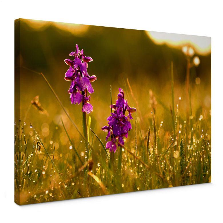 Leinwandbild Blumen im Morgentau