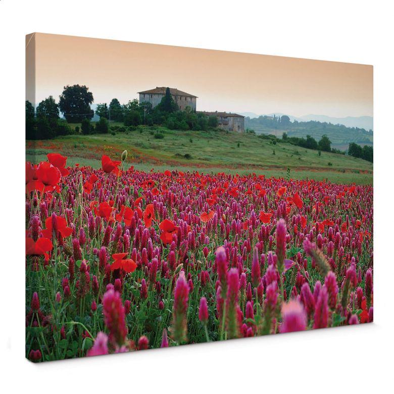 Leinwandbild Blumenwiese Toskana