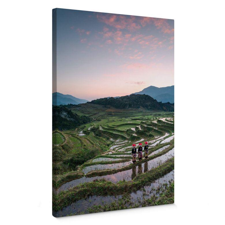 Leinwandbild Colombo - Reisterrassen in Vietnam