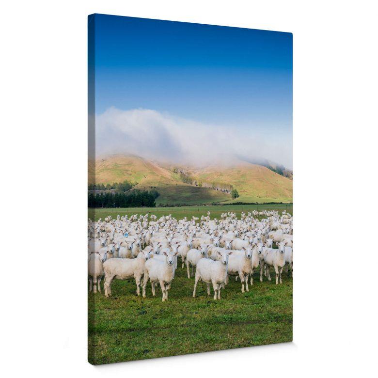 Leinwandbild Colombo - Schafherde in Neuseeland