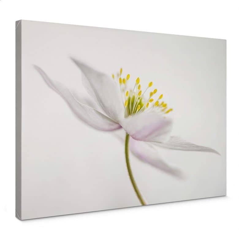 Canvas Disher - Nemorosa