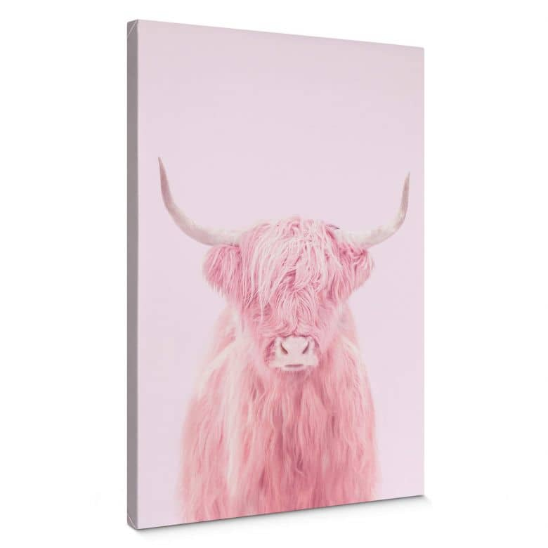 Leinwandbild Fuentes - Highland Cow