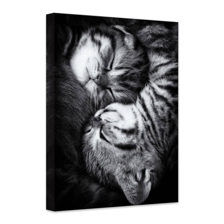 Leinwandbild Jancova - Sweet Kitten