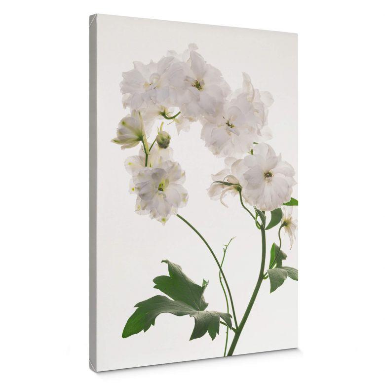 Canvas Kadam - Flora Hollyhock