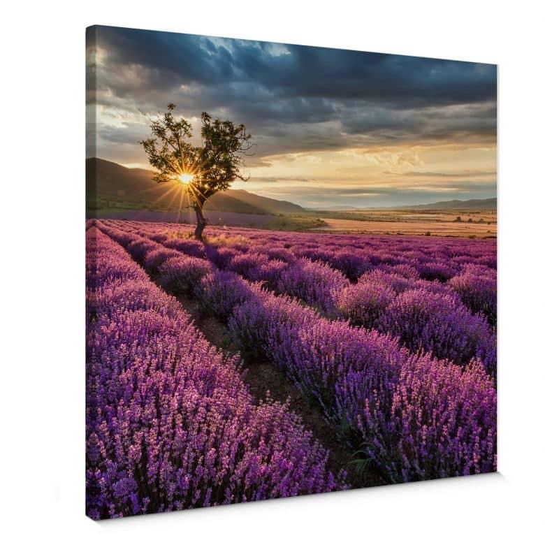 Canvas Lavendel in de Provence - vierkant