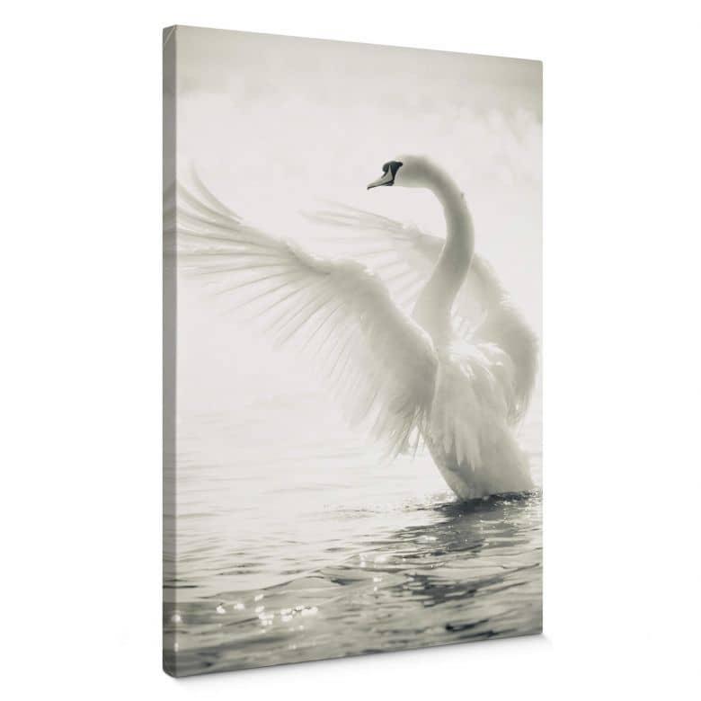 Majestic Swan Canvas print