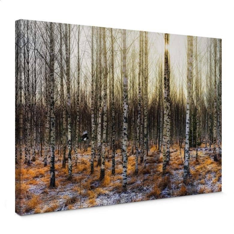 Canvas Print Olsen - Sunshine in birch forest
