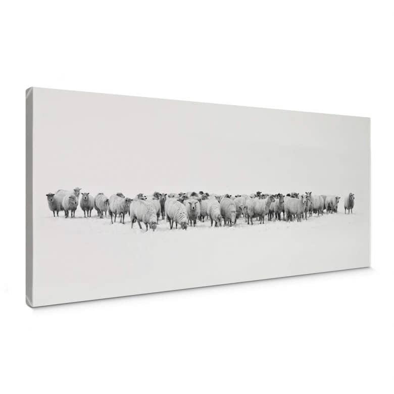 Canvas Kudde Schapen - Panorama