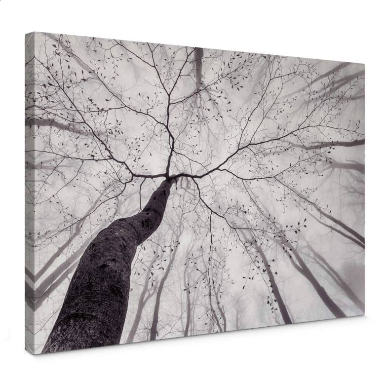 Canvas Print Pavlasek - A view of the tree tops