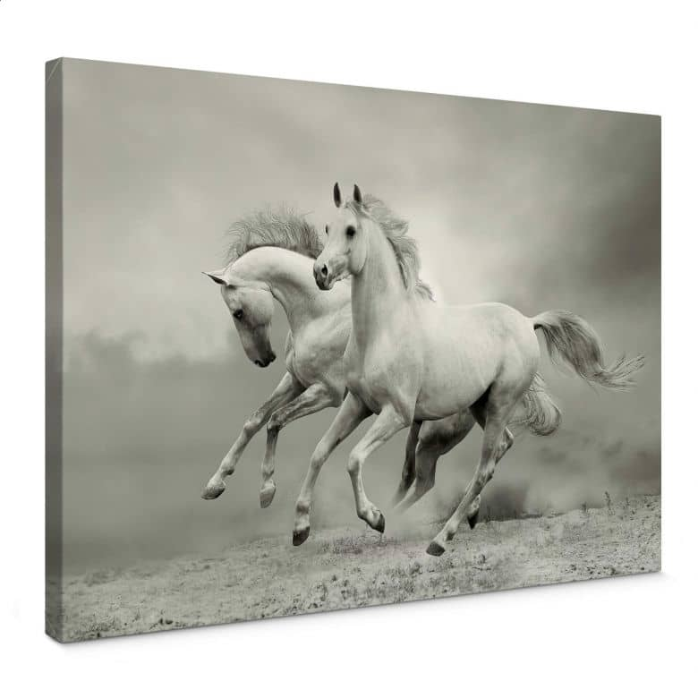 Canvas Paarden in Galop