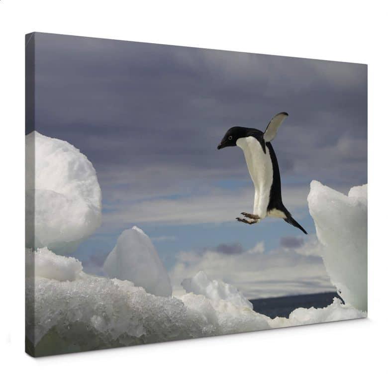 NG Penguin Fly Canvas print