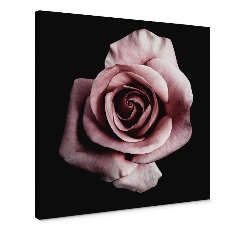 Leinwandbild Einzelne Rose - Quadratisch