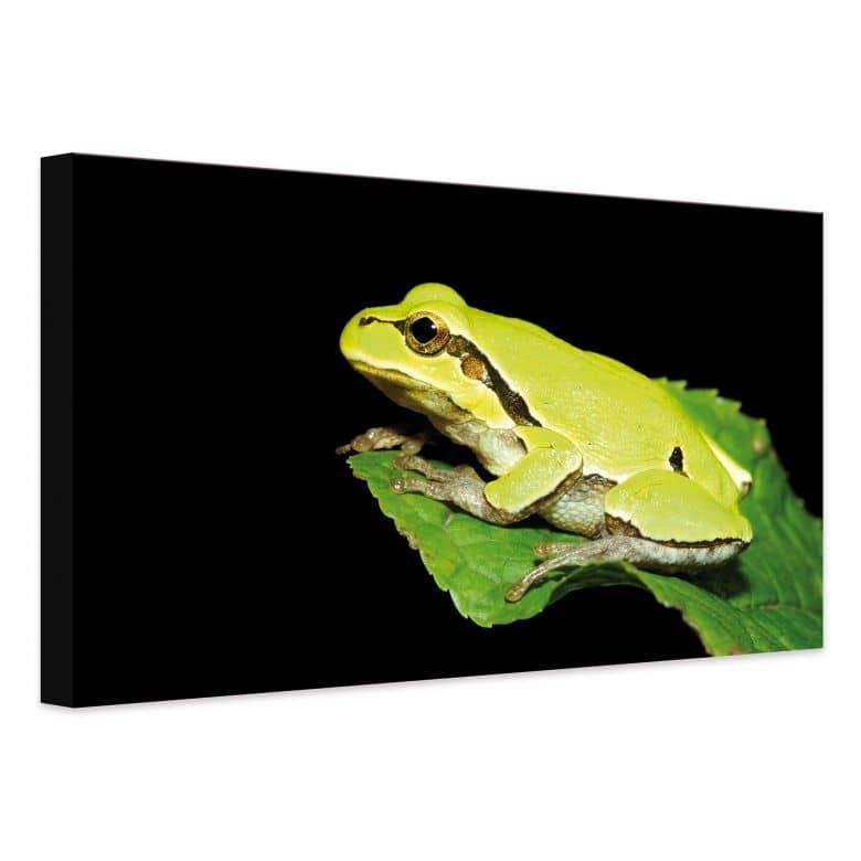 Leinwandbild Grüner Frosch