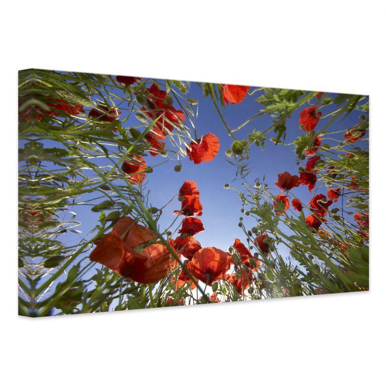 leinwanddruck mohnfeld wandbilder mit blumenwiese wall. Black Bedroom Furniture Sets. Home Design Ideas
