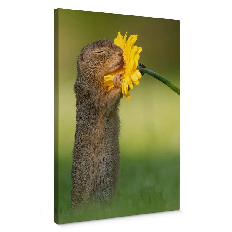 Canvas Print Dick van Duijn - Squirrel smelling flower (portrait)