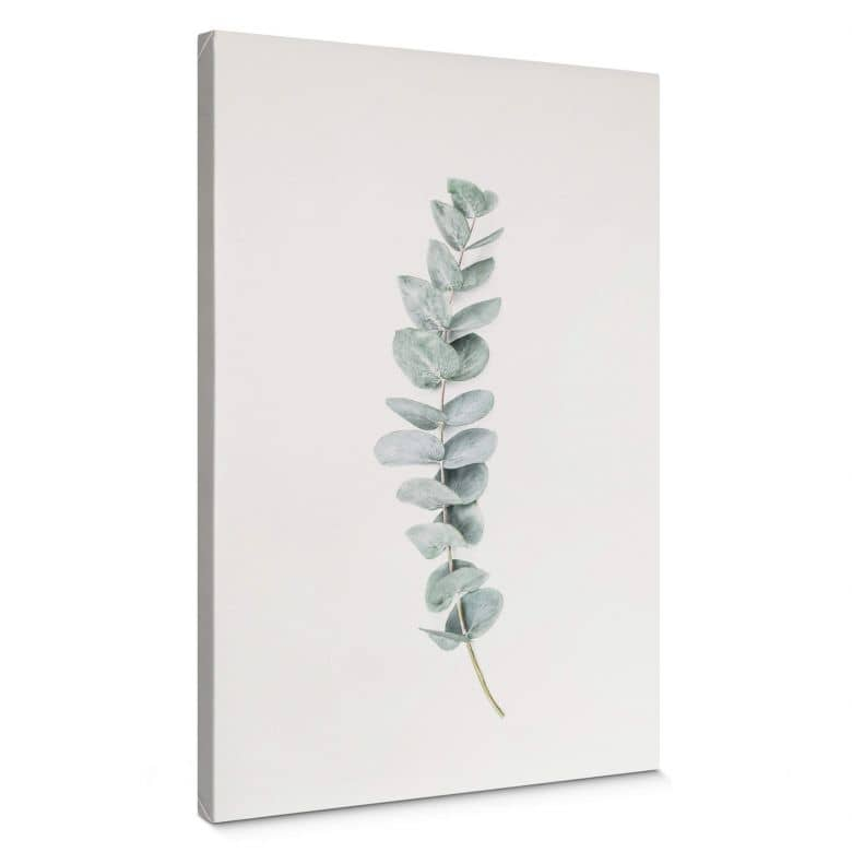 Canvas - Sisi & Seb - Takje Eucalyptus