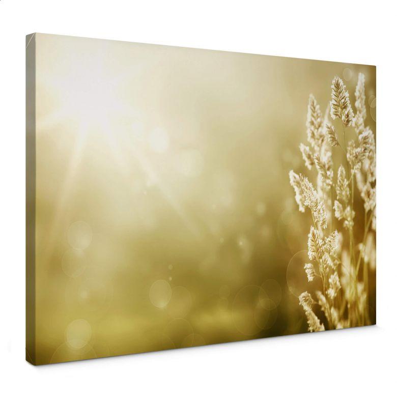 Sunny Cornfield Canvas print