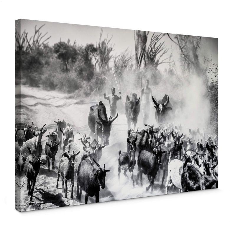 Canvas Tagliarino - Goat herd in Africa