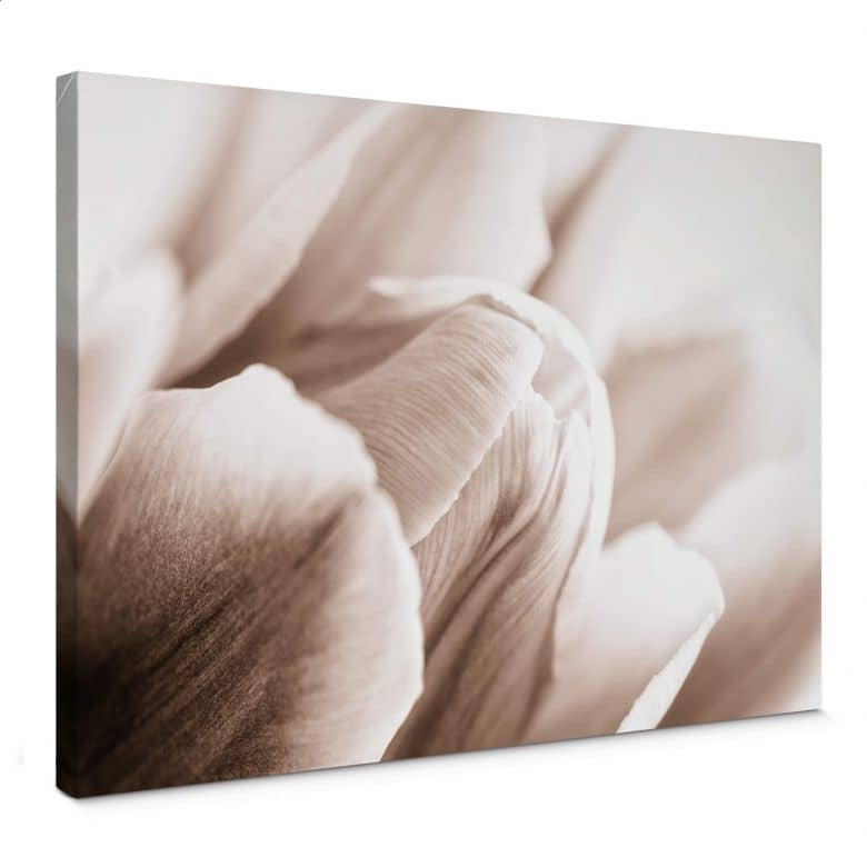 Tulips in Detail Canvas print