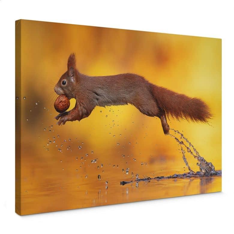 Leinwandbild van Duijn - Eichhörnchen im Sprung