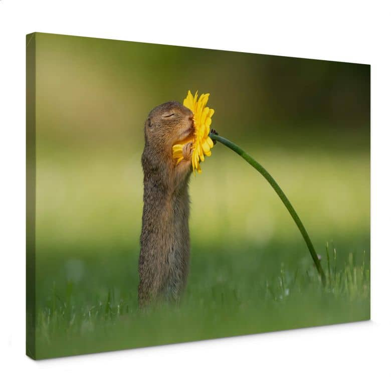 Canvas Print Dick van Duijn - Squirrel smelling Flower
