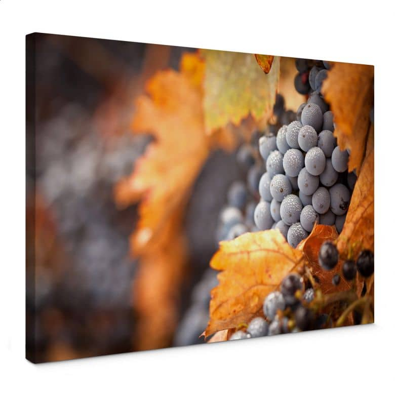 Grapes in Autumn Canvas print