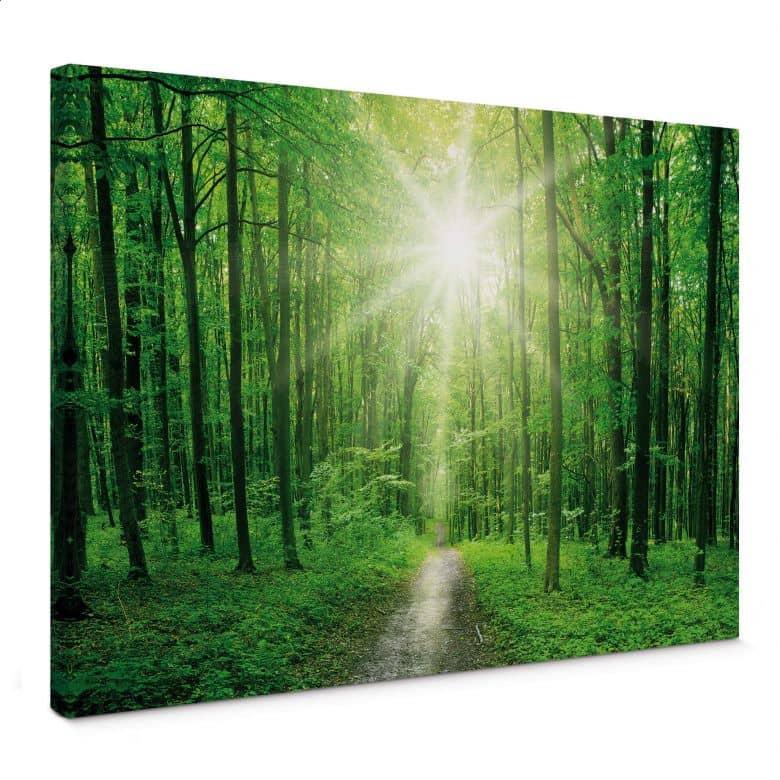 La lumière du soleil Forêt Verte Arbres Photo Toile Wall Art Cinq Panneau