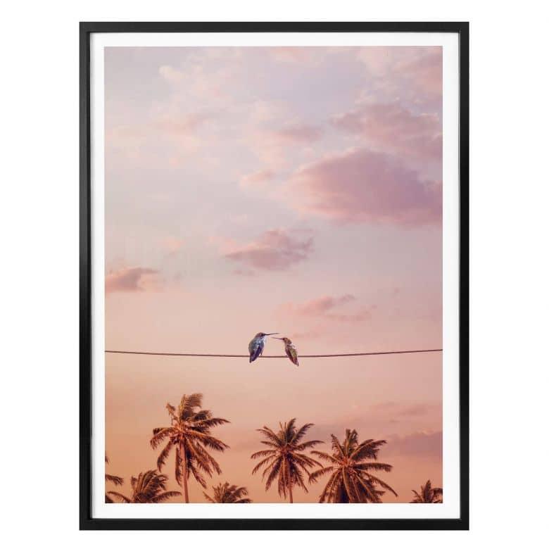 Poster Loose - Hummingbirds in Love